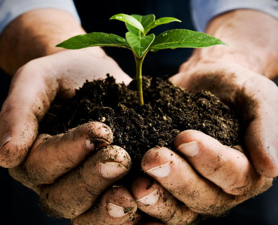 Health starts with the soil